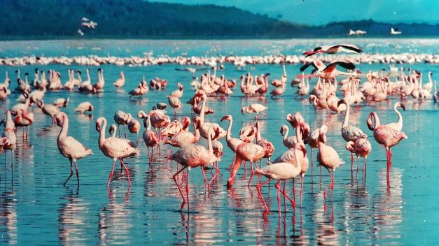 pink-flamingo-1484781_1920