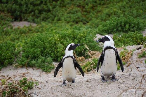 penguins-3994532_1280(1)
